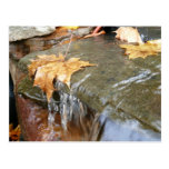 Fall Leaves in Waterfall II Autumn Photography Postcard