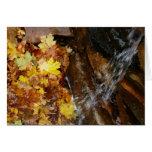 Fall Leaves in Waterfall III Autumn Nature Card