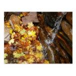 Fall Leaves in Waterfall III Autumn Nature Postcard