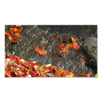 Fall Leaves in Waterfall Photo Print