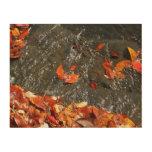 Fall Leaves in Waterfall Wood Prints
