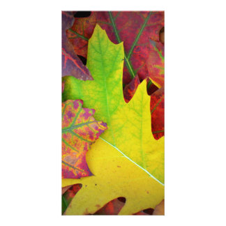 Fall Leaves in yellow, red, orange and Purple Photo Card