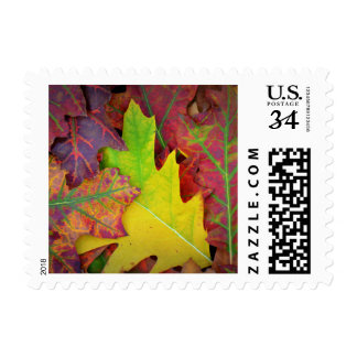 Fall Leaves in yellow, red, orange and Purple Postage
