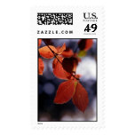 Fall leaves in Yosemite National Park Postage