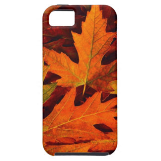 Fall leaves iphone5 case iPhone 5 case
