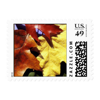 Fall Leaves Postage Stamp