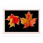 fall leaves postcards