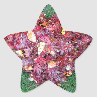 Fall Leaves Raked into Heart Shape on Green Grass Star Sticker