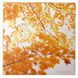 Fall Leaves Reflection Tile