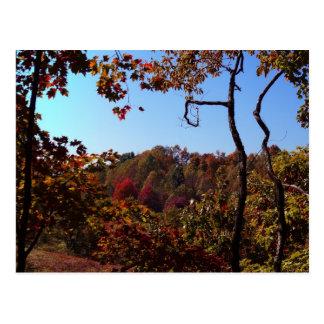 """Fall Leaves Scene"" Postcard"