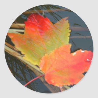 Fall Leaves - stickers