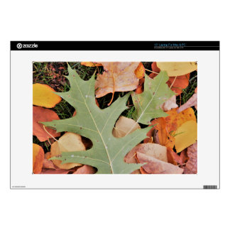 "Fall leaves with yellows and green 15"" laptop skin"