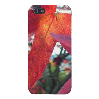 fall leaves,yellow,red, maple, tree case for iPhone SE/5/5s