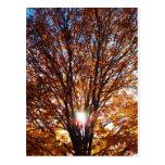 Fall Light Postcard