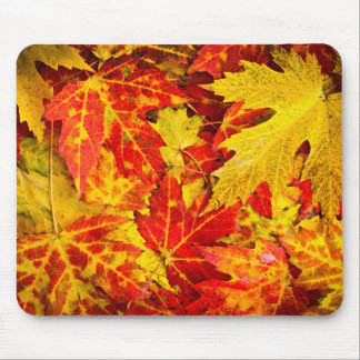Fall maple leaves background mouse pad