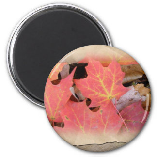 Fall Maple Leaves Coordinating Items Magnet