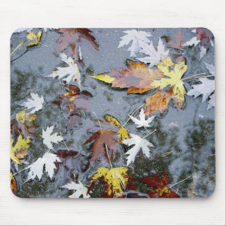 Fall Maple Leaves in Water Photo E.L.D. Mouse Pad
