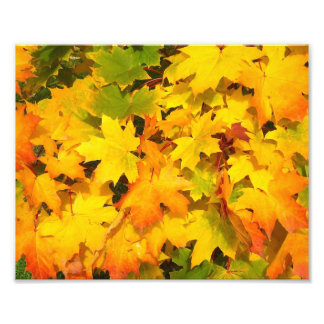 Fall Maple Leaves with Autumn Colors Photo Print