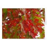 Fall Maple tree Pioneer's Park Card  8