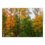 Fall Maple Trees Autumn Nature Photography Card