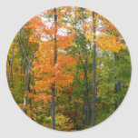 Fall Maple Trees Autumn Nature Photography Classic Round Sticker