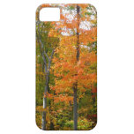 Fall Maple Trees Autumn Nature Photography iPhone SE/5/5s Case