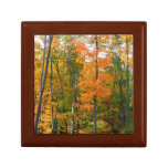 Fall Maple Trees Autumn Nature Photography Jewelry Box