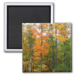 Fall Maple Trees Autumn Nature Photography Magnet