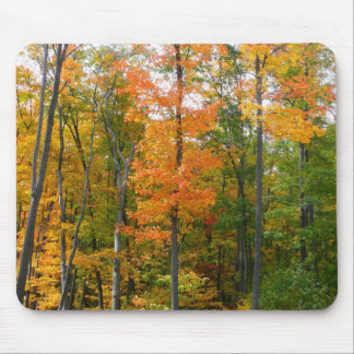 Fall Maple Trees Autumn Nature Photography Mouse Pad