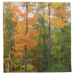 Fall Maple Trees Autumn Nature Photography Napkin