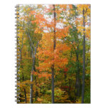 Fall Maple Trees Autumn Nature Photography Notebook