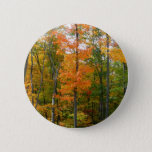 Fall Maple Trees Autumn Nature Photography Pinback Button