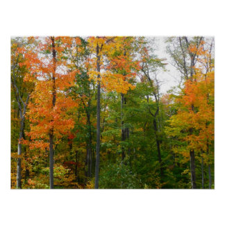 Fall Maple Trees Autumn Nature Photography Poster