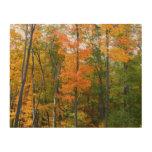 Fall Maple Trees Autumn Nature Photography Wood Wall Art