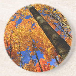 Fall maple trees coaster