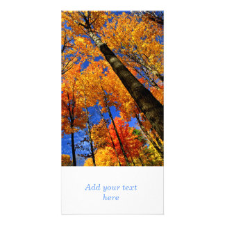 Fall maple trees photo greeting card