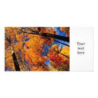 Fall maple trees photo card