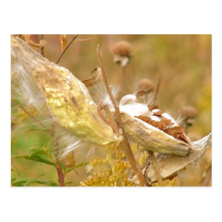 Fall Milk Pods Post Cards