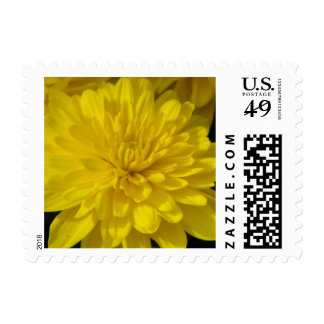 Fall Mum Postage Stamp