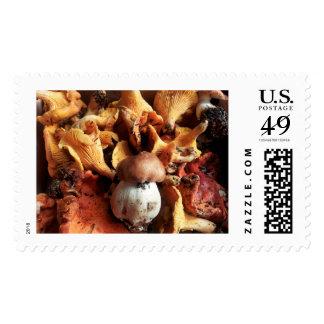 Fall Mushroom Stamps