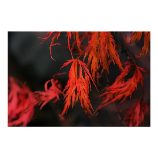 Fall On Fire Canvas & Poster Print