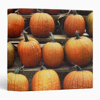 Fall pumpkins 3 ring binder