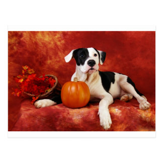 Fall puppy postcards