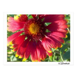 Fall Red Flower(C)Sandiish Postcard