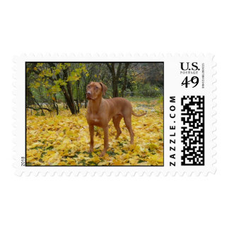 Fall Ridgie Stamps