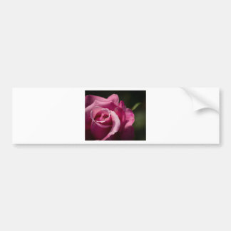 Fall Rose Bumper Sticker