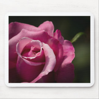 Fall Rose Mouse Pads