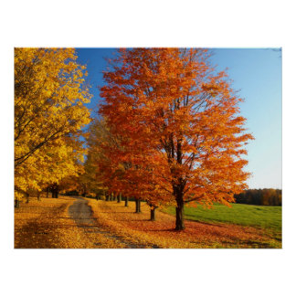 Fall Scene In Vermont Poster