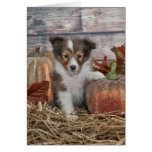 Fall Sheltie Puppy Greeting Cards