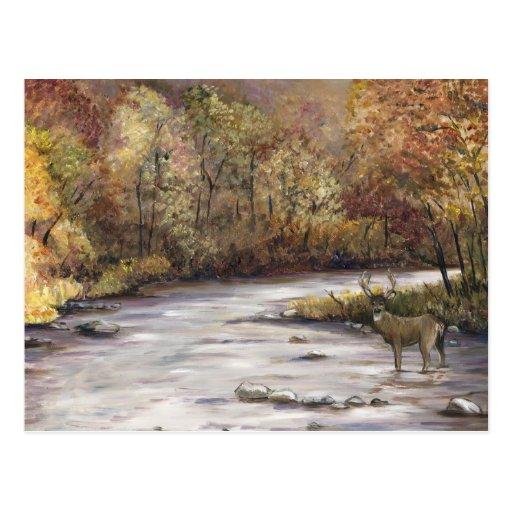 Fall Stream Art Postcard